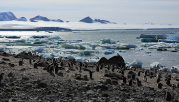 Brown Bluff im Antarctic Sound