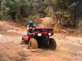 Quad Bike Tour - Ahipara Gumfields